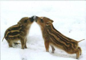 Olaf Latzel jagt Wildschweine